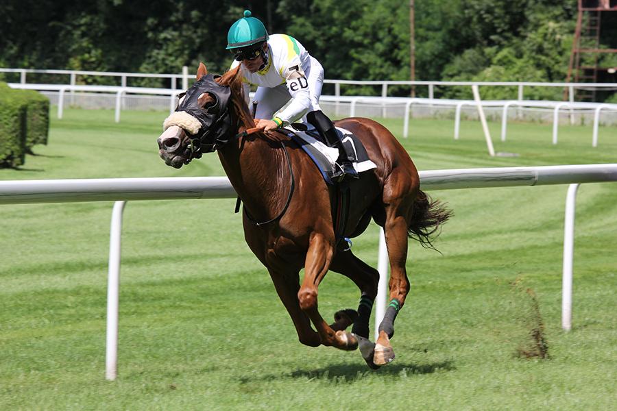 paardenrace afbeelding